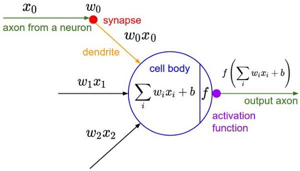 funcion activacion axon dendrita sigmoidea perceptron